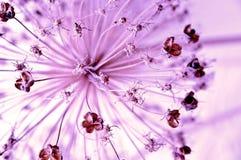 抽象花紫色 库存图片