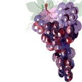 抽象葡萄 库存图片
