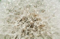 抽象蒲公英花用水投下背景,特写镜头 库存照片