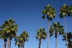 抽象蓝色掌上型计算机天空结构树 免版税库存图片