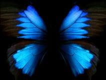 抽象蓝色模式 蝴蝶伊利亚斯的翼 特写镜头 蝴蝶纹理背景的翼 免版税库存照片