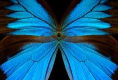 抽象蓝色模式 蝴蝶伊利亚斯的翼 特写镜头 免版税库存照片