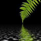 抽象蕨叶子 图库摄影