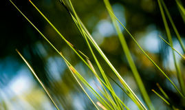抽象藤茎 库存图片