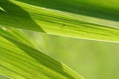 抽象虹膜叶子背景 图库摄影