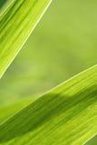 抽象虹膜叶子背景 库存图片