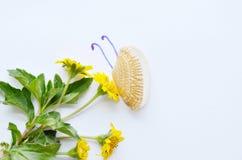 抽象蛤蜊壳看起来在白色背景的蝴蝶哺养的万寿菊花粉 免版税库存图片