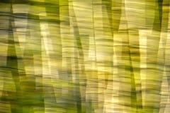抽象行动迷离树作用 库存图片