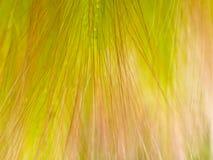 抽象被构造的背景花卉草 库存照片