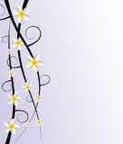 抽象装饰赤素馨花花 免版税库存照片
