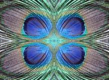 抽象设计羽毛孔雀 免版税库存照片