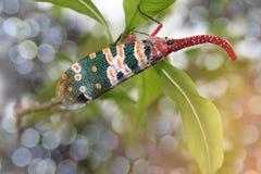 抽象软性被弄脏的和软的焦点, Lanternflies,灯笼烦扰,在龙眼的Fulgorid臭虫分支与bokeh,射线光a 库存照片