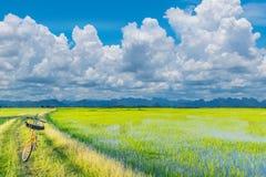 抽象软的半焦点剪影在土制堤草路的自行车,与美丽的天空a的绿色水稻领域 免版税图库摄影