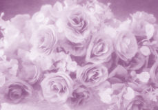 抽象软的样式玫瑰色花 库存图片
