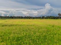 抽象软的焦点水稻领域剪影,与美丽的天空的杂草和云彩在平衡的泰国 库存照片