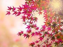 抽象迷离和软绵绵地甜桃红色樱花背景 库存照片