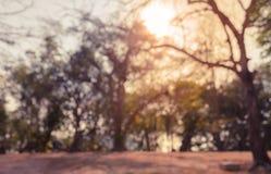 抽象迷离城市公园有阳光背景 库存图片