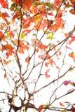 抽象迷离秋天背景 库存图片