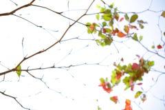 抽象迷离秋天背景 免版税图库摄影