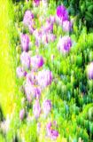 抽象迷离背景和软的自然 免版税库存图片
