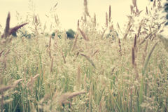 抽象野草 库存照片