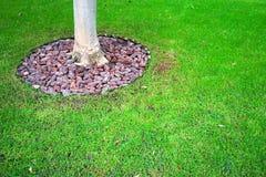 抽象难看的东西背景-岩石、树干和绿草在公园 免版税库存照片