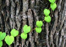 抽象难看的东西背景-棕色吠声和绿色叶子 库存图片