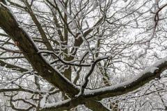 抽象雪分支纹理 图库摄影