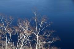 抽象霜结构树 免版税库存照片