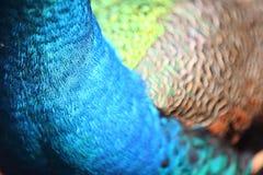 抽象颜色表单孔雀 免版税库存图片