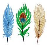 抽象鸟装饰羽毛例证集 免版税库存照片