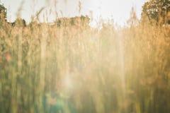 抽象麦地背景 免版税库存图片