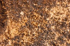 抽象黄色与典雅的古色古香的油漆的andbackground豪华富有的葡萄酒难看的东西背景纹理设计在墙壁例证 库存图片