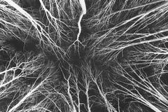 抽象黑森林倒置白色 库存图片