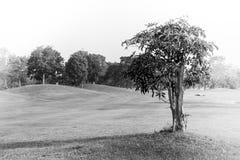 抽象黑白在高尔夫球场领域的图象单独树在乡下 免版税库存照片