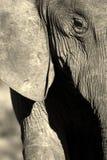 抽象黑色大象图象白色 免版税库存照片