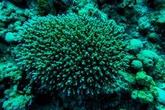 抽象水下的场面、珊瑚和鱼 图库摄影