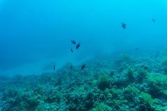 抽象水下的场面、珊瑚和鱼 免版税库存照片