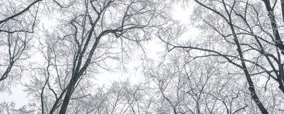 抽象结冰的树枝 背景蓝色雪花白色冬天 免版税库存图片