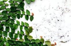 抽象黑黑地面绿色植物 库存照片