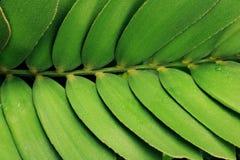抽象黑黑地面绿色植物 库存图片