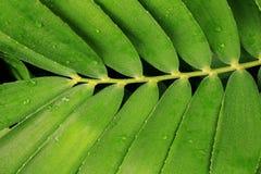 抽象黑黑地面绿色植物 免版税库存图片