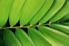 抽象黑黑地面绿色植物 免版税库存照片