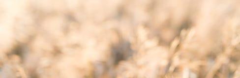 抽象水彩淡色背景-被弄脏的麦子 免版税库存照片