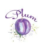 抽象水彩绘画李子果子 免版税库存图片