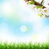 抽象晴朗的春天背景 库存照片