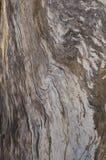 抽象死的苹果树树干吠声漩涡背景 免版税图库摄影