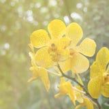 抽象黄色万代兰属兰花 库存图片