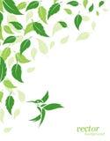 抽象绿色叶子和蜂鸟背景 免版税库存图片