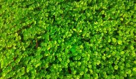 抽象绿色叶子 免版税库存照片